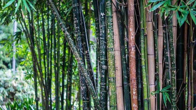 como plantar bambu