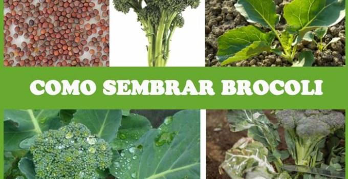 como plantar verduras en casa - como plantar