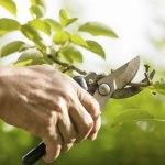 La función de la poda en los árboles y arbustos