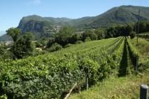Corteglia - Vineyards