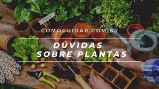 Dúvidas sobre plantas, plantio