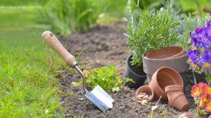 Como descartar vasos de planta