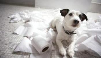 Resultado de imagen para perro quiere ir contigo al baño