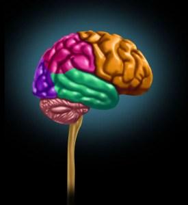 Como funciona el cerebro.jpg