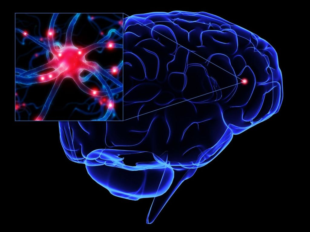 Resultado de imagen de El suministro de datos que llegan al cerebro procedente de los sentidos