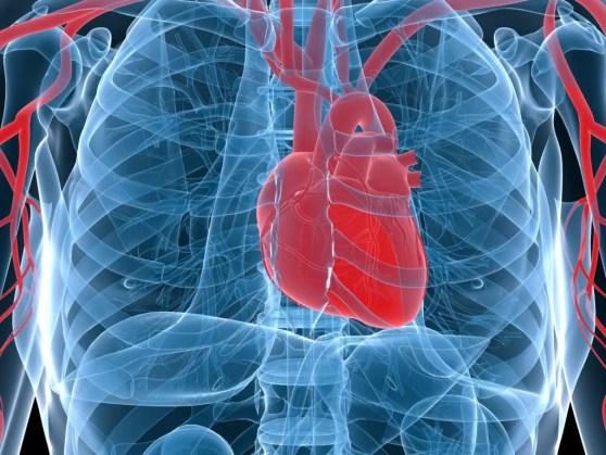 Localización del corazón