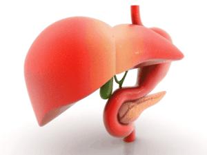 El hígado es el único órgano capaz de regenerarse