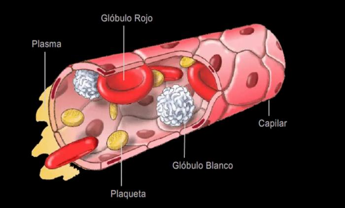 Las plaquetas producen la contraccion de las fibras musculares provocando la coagulacion de la sangre
