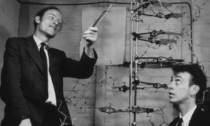 Watson y Crick en abril de 1953 publicaron un articulo descubriendo la estructura del adn y revolucionando el mundo cientifico