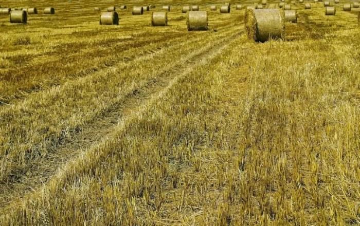 La tierra es un factor de produccion indispensable para su realizacion