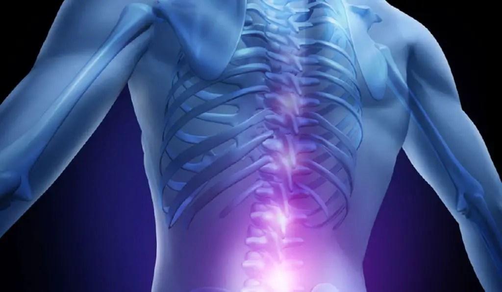 Qué es la médula espinal y cuáles son sus funciones?