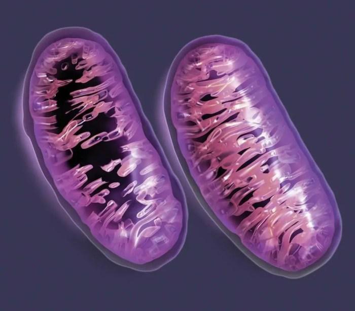 Modificacion del adn con la edad