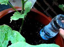Cómo regar tus plantas aun cuando sales de viaje