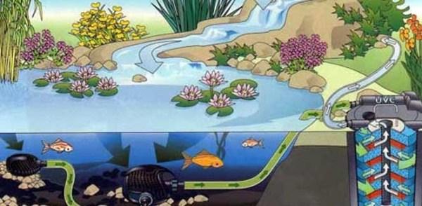 C mo mantener cristalina el agua del estanque del jard n for Como mantener el agua limpia de un estanque