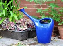 Cómo limpiar las plantas