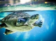Cómo tomar fotos bajo el agua 2