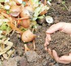 Cómo hacer abono orgánico para las plantas
