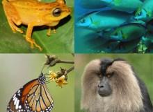 Cómo hacer un collage de fotos digital