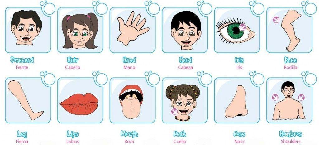 Partes del cuerpo en ingles y español, cuerpo humano,