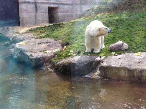Munique, Alemanha, Zoológico, Crianças - Foto Nathalia Molina @ComoViaja