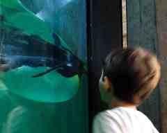 Munique, Alemanha, Zoológico, Crianças, Hellabrunn - Foto Nathalia Molina @ComoViaja (9)