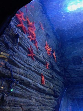 SeaLife Munique Aquario Alemanha Viagem - Foto Nathalia Molina @ComoViaja (25)