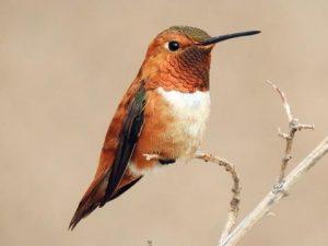 May 2019: Royann Petrell: Gardening for Birds