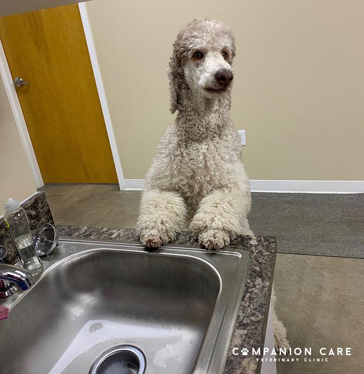 dog washing paws