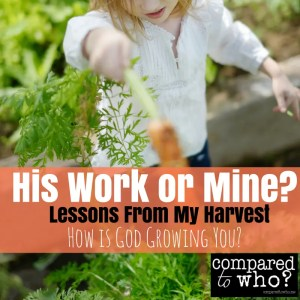 How is God growing you? Here are some lessons from my harvest that have taught me about his work and mine.