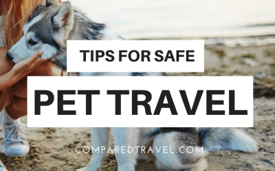 Tips For Safely Traveling With Pets