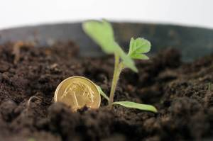 Kurs dolara (USD/PLN) ma wynieść 3,84 zł, franka (CHF/PLN) 4,19 zł, według Kantar