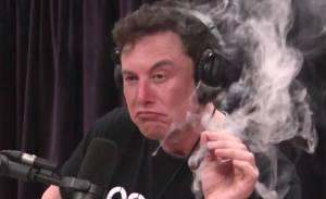Dogecoin w kręgu zainteresowania Tesli? Elon Musk pracuje z devami DOGE