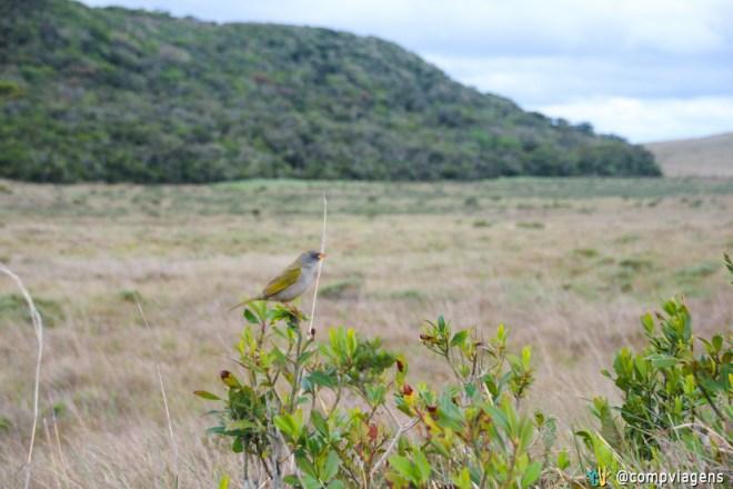 Pássaro no Parque da Serra Geral