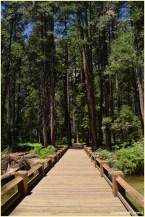 Bridge to Yosemite Falls