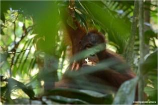 A glimpse through the jungle
