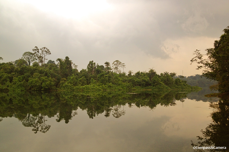 Calm before the storm at Macritchie Reservoir