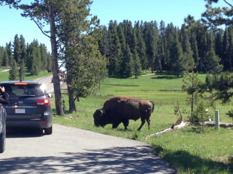 Yellowstone to Montana