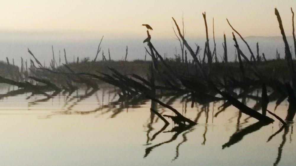 A heron sleeps