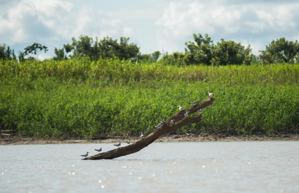 Birds in the Amazon