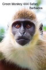 Green Monkey 4X4 Safari