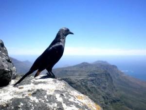 Awakening the inner voice bird