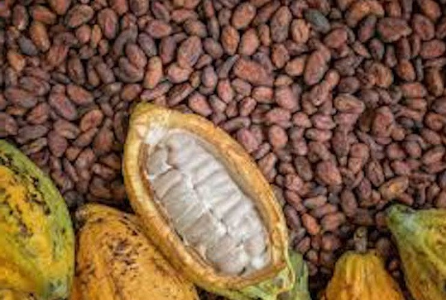 Sample Cocoa Bean Processing & Marketing Business Plan for FREE