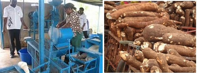 Cassava Processing Business In Nigeria/How to Start Cassava Processing Business
