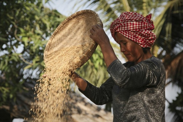 Affordable Rice Mill Business Plan Template For Nigerian Entrepreneurs