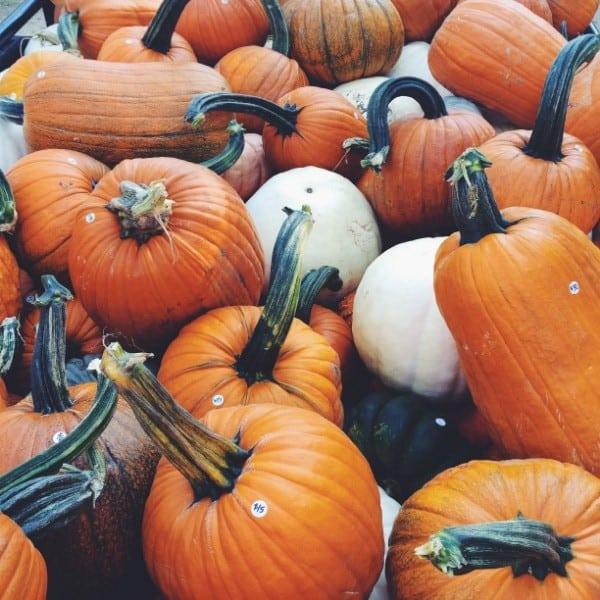 Happy Fall!