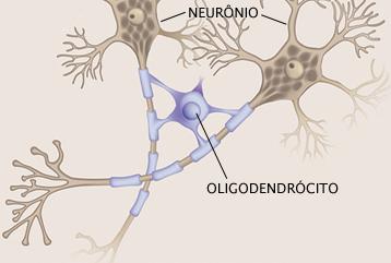 Sono auxilia no reparo da bainha de mielina dos neurônios 5
