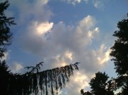 Evergreen and Clouds ©2011 Lynn Emberg Purse, All Rights Reserved