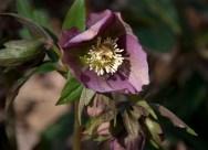 Inside the blossom