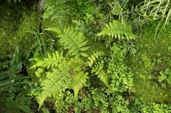 Moss and ferns add texture