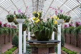 Grand orchid display in the Sunken Garden